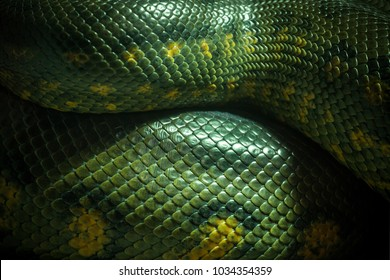 Texture and body of anaconda green.