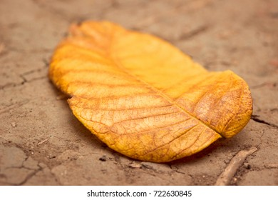 texture of a bright orange leaf lying on the ground in the golden autumn gorgeous natural background