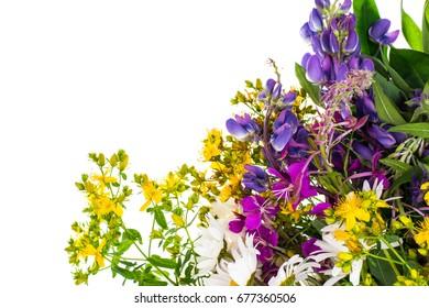 Texture of bright wildflowers. Studio Photo