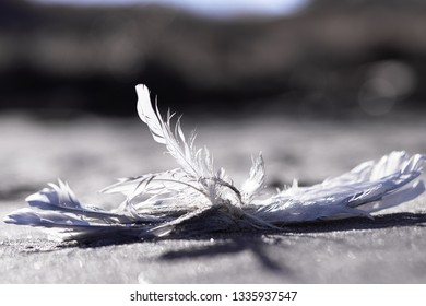 Texture of brilliant sand of graphite color. Footprints in the sand. Close-up. White feathers of seagulls in the sand. Sunny summer day on the Baltic Sea, Curonian Spit.