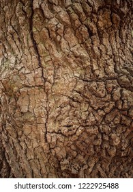 texture of the brown bark of a tree