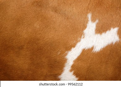 Texture of a brown Cow Coat