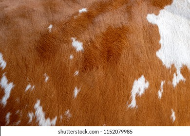 Texture of a brown Cow Coat. Fragment. White and brown spots.