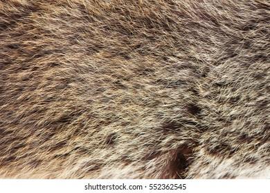 texture brown Siberian bear Ursidae skins