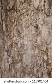 A texture of brown tree bark is shown close up.