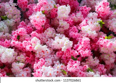 Texture of bunch flowers pink and white color, close up.