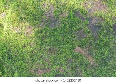 Texture cement floor and green grass, ground texture