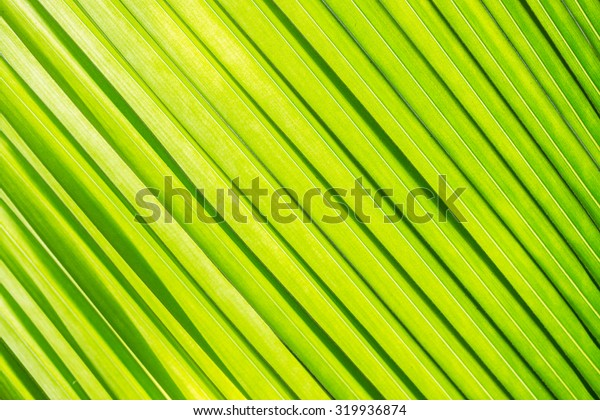 texture closeup coconut leaves