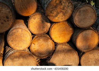 Texture of coconut wood with sunset light