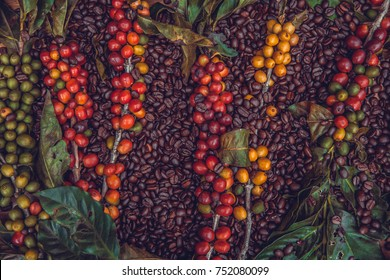 Texture of coffee beans and coffee berries