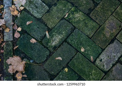 texture of concrete tiles on the walkway overgrown with moss, walkway of old beige and green paving stones with large maple and small autumn leaves on it, walkway in the park, underfoot, natural and u