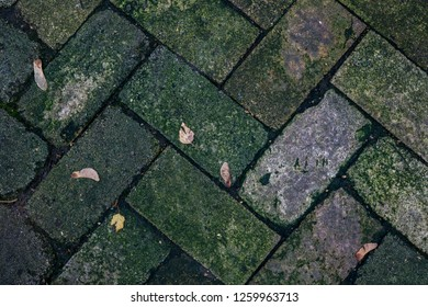 texture of concrete tiles on a walkway overgrown with moss, a walkway of old beige paving stones and green sergo with small autumn leaves on it, a walkway in the park, underfoot, natural and urban tex