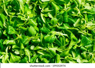 texture of corn salad, lamb's lettuce  - Shutterstock ID 199353974