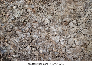 The texture of crack the ground. The structure of the soil close-up.Many small rubble