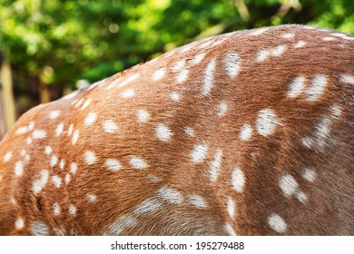 texture of deer fur with trees