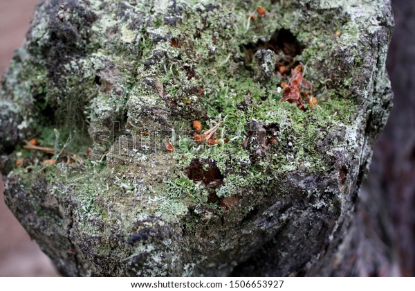 Texture Different Mosses On Stone Forest Stock Photo Edit Now