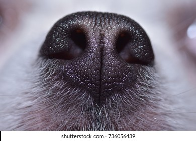 Texture of dog nose, Close-up photography