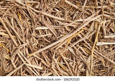 Texture of dry grass