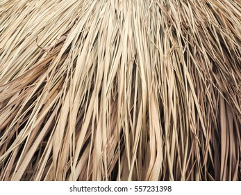 Texture of the dry grass for roofing in Thailand.