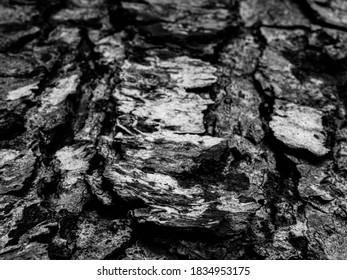 Texture Ecorce Arbre Noir et Blanc