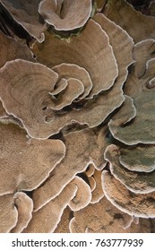 texture of elephant ear coral