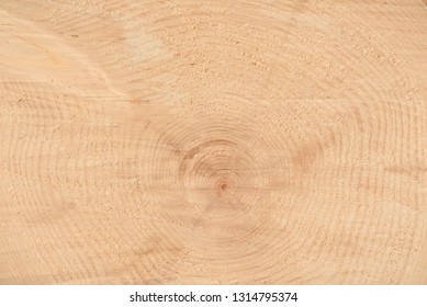 The texture of the end of the tree. Saw cut wood close up. Rough-wood on floors. Wood background. The end of the tree.