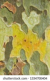 texture of eucalyptus bark