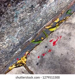 Texture. Fallen leaves on a cement sidewalk.