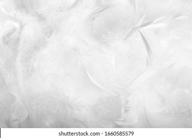 texture of feathers and down.white background
