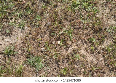 texture  field soil with plants