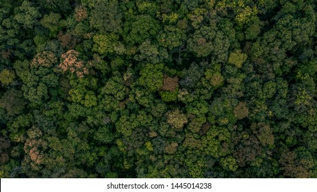 Texture of forest, Background of forest, Aerial top view background forest.