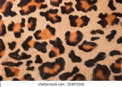 The texture of fur leopard spotted, orange-black