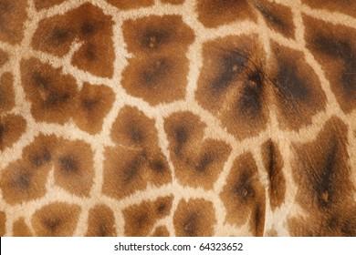 Texture of a giraffe