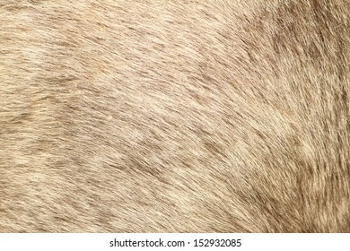 texture of gray fur from a short hair pony