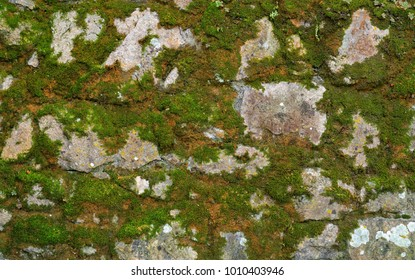 Texture of gray stone wall covered with lichen and moss