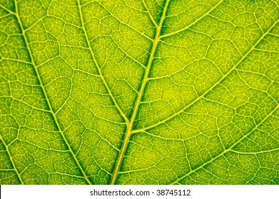 ?lose-up of the texture of green leaf