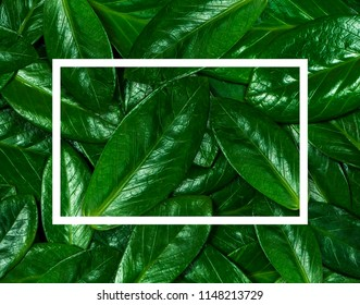 Texture of green leaf. Background texture of leaves closeup.