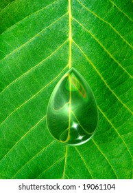 Texture of a green leaf with drop