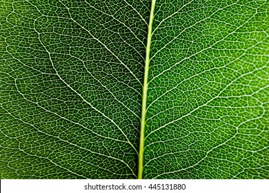 Texture of green leaf pear