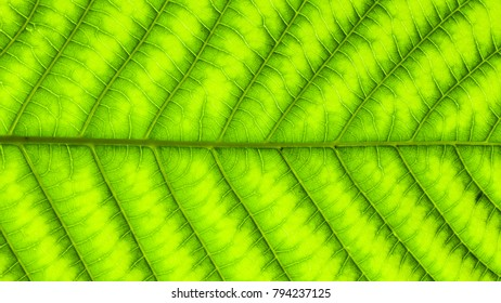 texture of green leaves for background