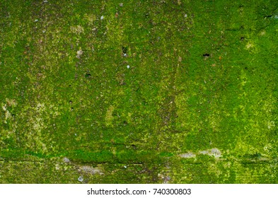Texture of a green mossy concrete wall with a few shallow holes.