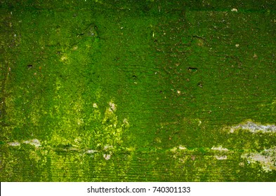 Texture of a green mossy concrete wall with a few shallow holes and a noticeable imprint of a wooden formwork: 3 boards and 2 seams between them.