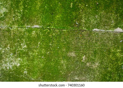 Texture of a green mossy concrete wall with a noticeable imprint of a wooden formwork: 2 boards and the seam between them.