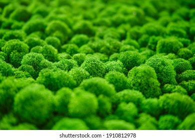 Texture of green stabilized moss. Green grass with top view, background