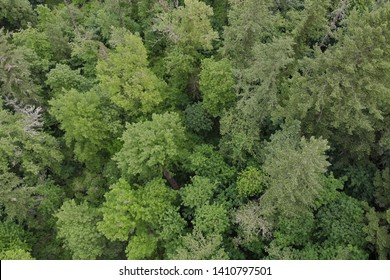 Texture of green trees, top view
