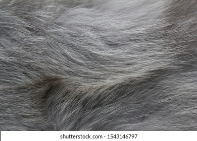 Texture grey fox fur, high pile. Background