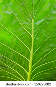 texture of leaves