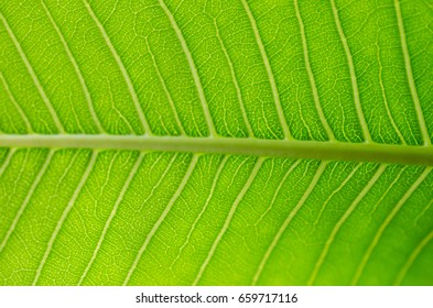 texture of leaves.