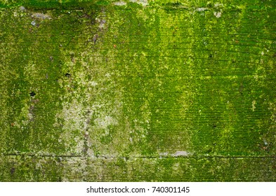 Texture of a lime green mossy concrete wall with a 2 shallow holes and a noticeable imprint of a wooden formwork: 3 boards and 2 seams between them.