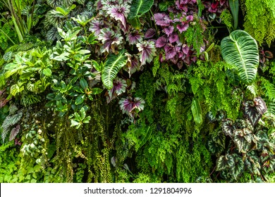 texture of living wall with vegetation - Shutterstock ID 1291804996